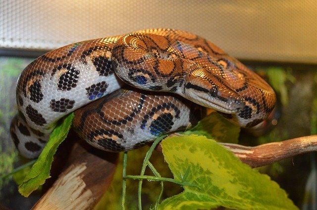 I hada si můžete zamilovat