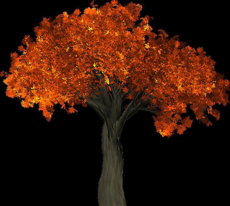 Zázračný jedlý strom